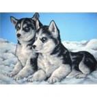 Deux Huskys
