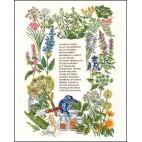 Hiervas aromaticas