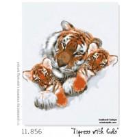 Cadell de Tigre